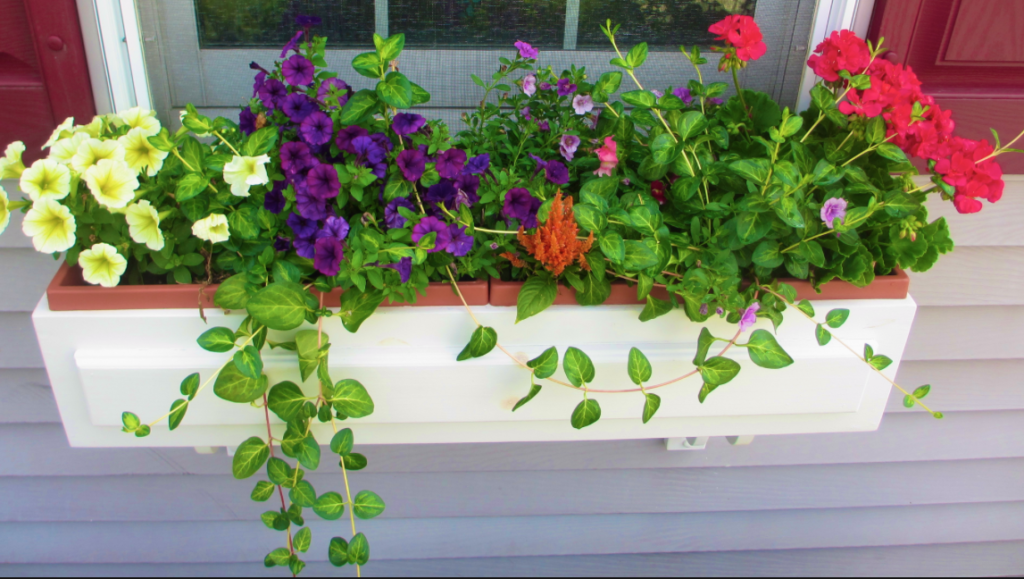 window box gardening for health, food and wellness
