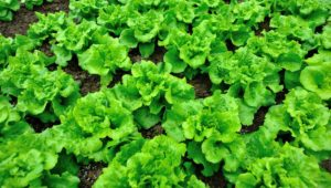 12 crops to grow in the winter